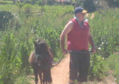 Tilley My Horse